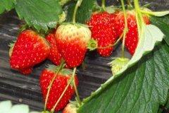 春天不宜吃什么水果?春天不宜吃的水果有哪些
