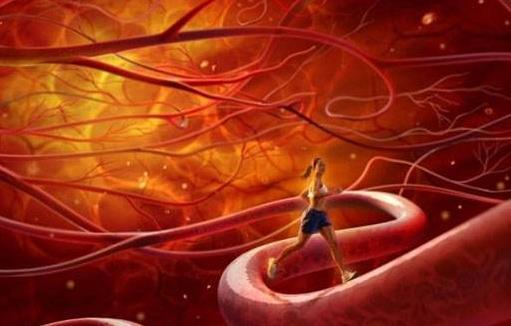血管是人的生命的通道 养护血管的饮食调理