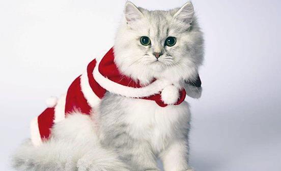 吸猫有风险 免疫力低尽量别养猫