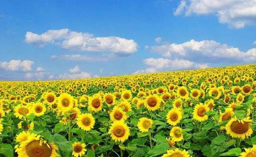 夏季养生防病 养心气固阳气是该时段的保健原则