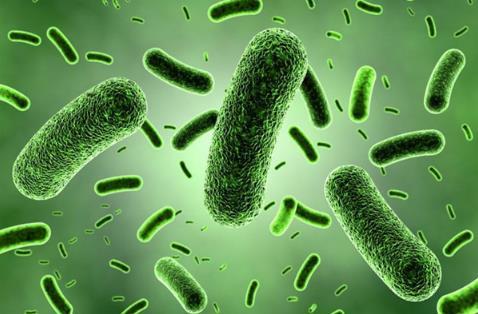 益生菌或解开长寿密码 补充益生菌可长寿