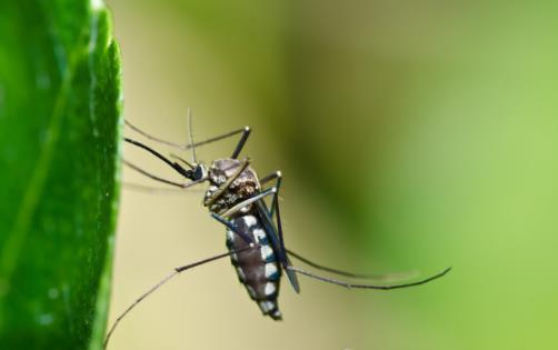 O型血人群大呼冤枉 招蚊子的真正原因竟和想的不同