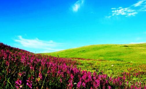 若尔盖湿地长征走过的最美的湿地