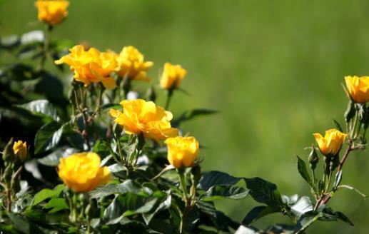 春季养生注意保卫体内的阳气 未病先防有病防变