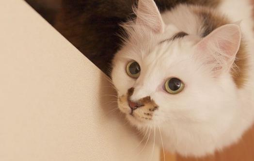 宠物猫咪不喜欢喝水不一定是病  这六种方法拯救你