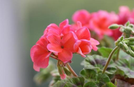 不适合在室内种植的植物 人碰触抚摸它们会过敏