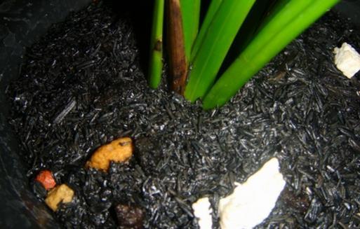 施草木灰对养花的好处 正确使用草木灰的窍门