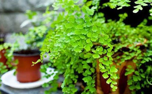家庭养花:适合家庭养的耐阴植物总有一款适合你