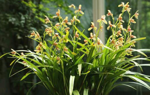 养兰花甚佳的基质 兰花爆盆枝叶蹭蹭长