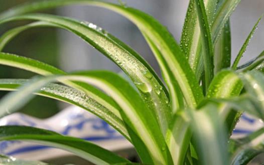 畏寒花卉春季出室的经验 掌握花卉的生长规律是关键