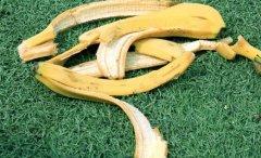 香蕉皮有非常高的营养成份 香蕉皮的神奇小妙用