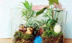 自己DIY苔藓微景观 苔藓微景观养护技巧