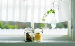 畏寒花卉春季出室的经验 掌握花卉的生长规律是